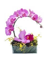 Arranjo de Orquídea Lilas no Vidro